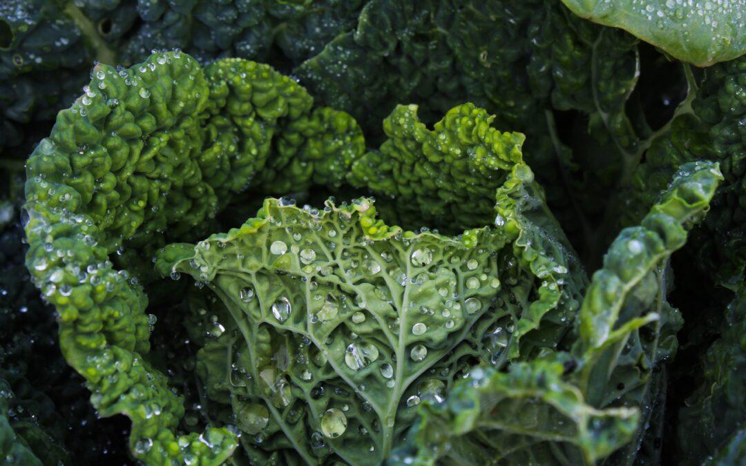 Sautéed Kale with Cranberries